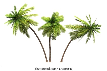 coconut palm trees isolated