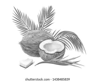 Coconut Pencil Illustration Isolated on White