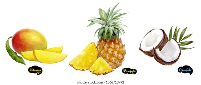 Coconut, pineapple, mango set watercolor hand drawn illustration.
