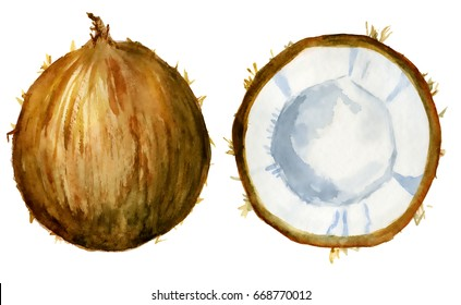 coconut slice watercolor hand drawn illustration, tropical exotic fruit isolated on the white background