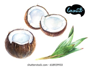 Coconut watercolor illustration. Coconut cut with leaf set watercolor isolated on white background.