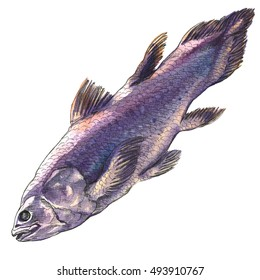 Coelacanth fish, latimeria chalumnae, isolated, watercolor illustration on white