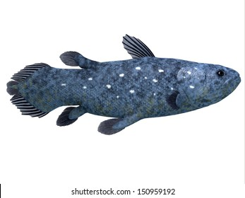 Coelacanth Fish on White - The Coelacanth fish was believed to be extinct but were discovered in 1938 to still be living.