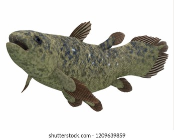 Coelacanth Fish Side Profile 3D illustration - The Coelacanth fish was thought to be extinct but was found to be a still living species.