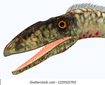 Coelophysis Dinosaur Head 3D illustration - Coelophysis was a carnivorous theropod dinosaur that lived in the Triassic Period of North America.