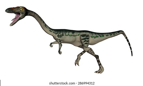 Coelophysis dinosaur running isolated in white background - 3D render