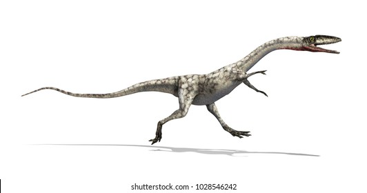 The Coelophysis was a dinosaur that lived during the Triassic period - 3d render.