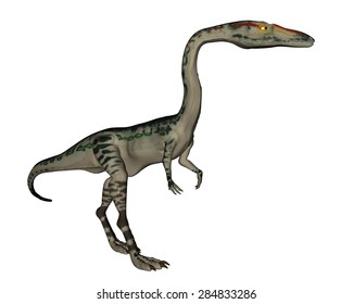 Coelophysis dinosaur walking isolated in white background - 3D render
