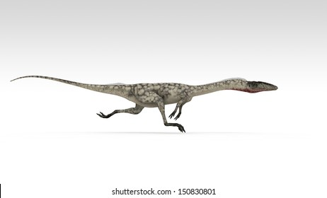 coelophysis isolated