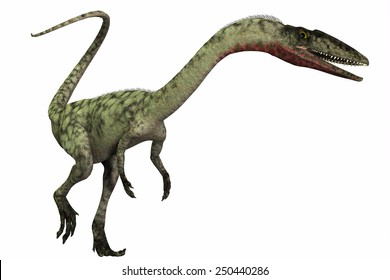 Coelophysis on White - Coelophysis was a bipedal predatory dinosaur that lived during the Triassic Period of North America.