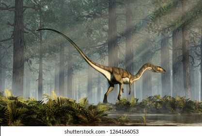 Coelophysis, one of the earliest dinosaurs, was a carnivorous theropod.  The creature walks into a forest of fir trees with a floor of ferns with rays of light shining down. 3D Rendering.