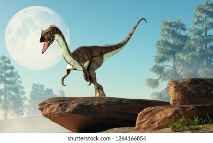 Coelophysis, one of the earliest dinosaurs, was a carnivorous theropod.  Here it stands on a rock in front of a full moon that is out in the sky on a cretaceous era afternoon. 3D Rendering.