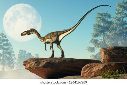 Coelophysis, one of the earliest dinosaurs, was a carnivorous theropod.  Here it stands on a rock looking at a full moon that is out in the sky on a cretaceous era afternoon. 3D Rendering.