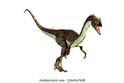 coelophysis, one of the earliest dinosaurs, was a carnivorous theropod.  Here is one turned towards the viewer on a white background.  This one is brown with black stripes. 3D Rendering.