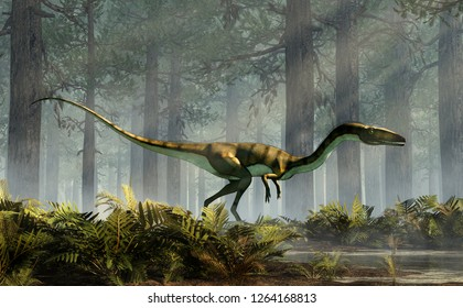 Coelophysis, one of the earliest dinosaurs, was a carnivorous theropod.  The creature stands in a forest of fir trees with a floor of ferns with rays of light shining down. 3D Rendering.