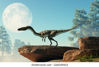 Coelophysis, one of the earliest dinosaurs, was a carnivorous theropod.  Here it stands on a rock under a full moon that is out in the sky on a cretaceous era afternoon. 3D Rendering.