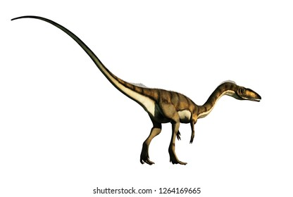 coelophysis, one of the earliest dinosaurs, was a carnivorous theropod.  Here is one turned away on a white background.  This one is brown with black stripes. 3D Rendering.