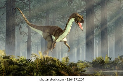 Coelophysis, one of the earliest dinosaurs, was a carnivorous theropod.  The creature walks out of a forest of fir trees with a floor of ferns with rays of light shining down. 3D Rendering.