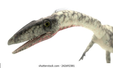 coelophysis portrain closeup with depth of field
