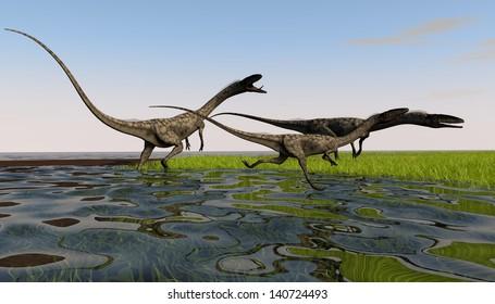 coelophysis in swamp meadow