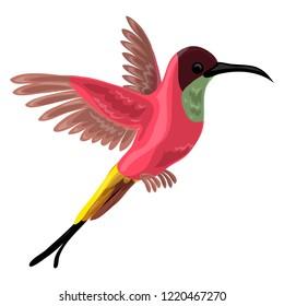 Colibri bird icon. Cartoon of colibri bird icon for web design isolated on white background