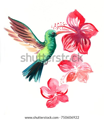 Colibri Hibiscus Stock Illustration 750606922 Shutterstock
