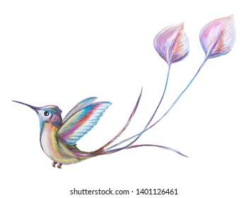 Colibri, watercolor drawing, hummingbird, birdie