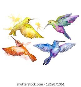 Colibri in a wildlife. Wild freedom, bird with a flying wings. Watercolor background illustration set. Watercolour drawing fashion aquarelle isolated. Isolated hummingbird illustration element.