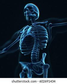 Collar bone xray. Human anatomy skeletal system, torso, ribs. 3D illustration