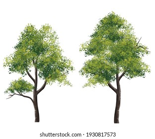 Collection of abstract watercolor green tree side view isolated on white background  for landscape plan and architecture layout drawing, elements for environment and garden, tree elevation