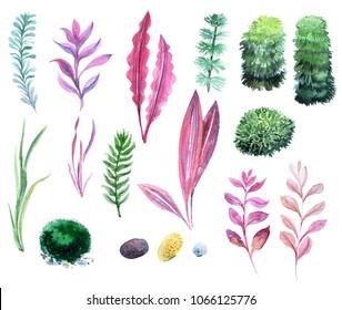 Collection of aquarium seaweeds