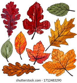 Collection of autumn leaves. Set of drawings with acrylic paints. Two-color print, imprint. Good for autumn design