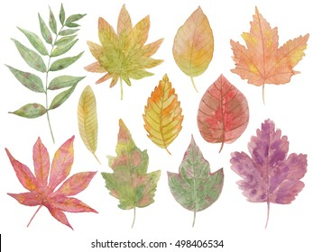 Collection of autumn leaves, watercolor illustrations, hand-painted
