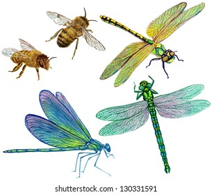 collection of bees and dragonflies