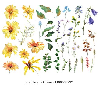 Collection Camomile yellou flower, hand drawing watercolor illustration