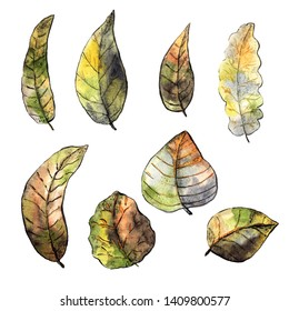 Collection of dry autum leaves. Black ink and watercolor mixed media.