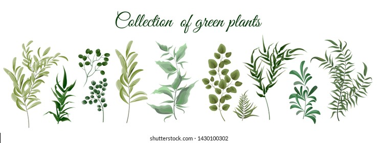 Collection of green plants. Elements for design