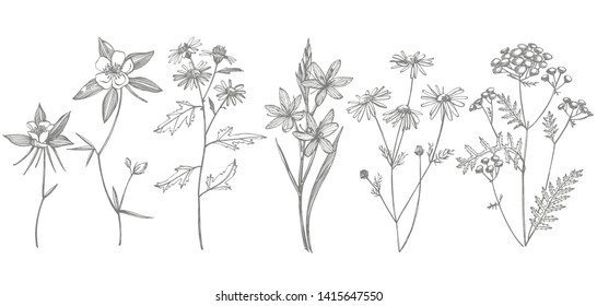 Collection of hand drawn flowers and herbs. Botanical plant illustration. Vintage medicinal herbs sketch set of ink hand drawn medical herbs and plants sketch.