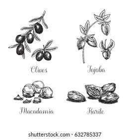 Collection of hand drawn herbs and nuts are also used in cosmetics, aromatherapy and medicine