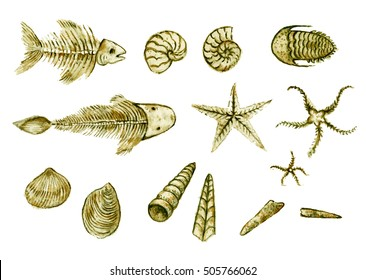 Collection of hand drawn seashell, ammonites, trilobite and other fossil animals.