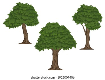 Collection of hand drawn tree with leaves 2d set illustrations isolated