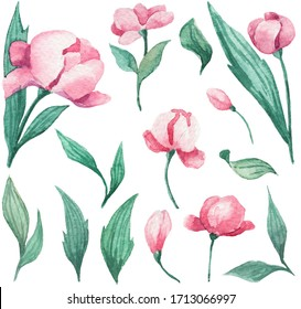 Collection of hand drawn watercolor floral elements. Blooming peony bud