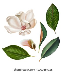 Collection of magnolia leaves andflowers  isolated on white background. Hand drawn graphic illustration.