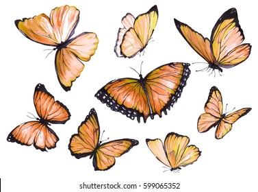 A collection of orange butterflies in flight. Watercolor illustration