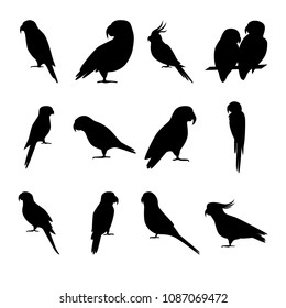 Collection of parrot silhouette icons in flat style. Tropical bird symbols isolated on white background.