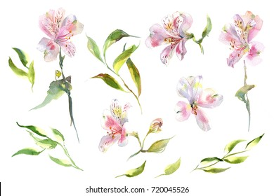 Collection romantic watercolor alstroemeria flowers