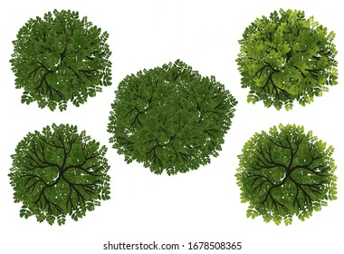 top view tree images stock photos vectors shutterstock https www shutterstock com image illustration collection tree top view landscape planmonkey 1678508365