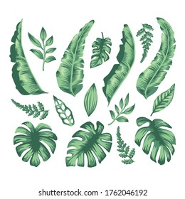 a collection of tropical leaves suitable for decorating the theme of summer, tropical