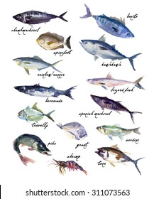 Collection of watercolor hand drawn fish isolated on white background. Bonito, rainbow runner, tuna illustration. Good for magazine, menu or book illustration, print design, any graphic design.