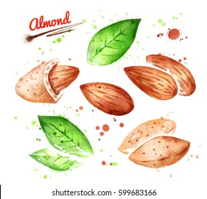 Collection of watercolor illustrations of almond nut, peeled and unpeeled with paint smudges and splashes.